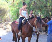 caballos1001