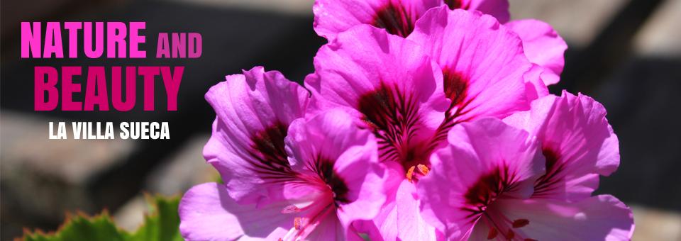 flower_960x340