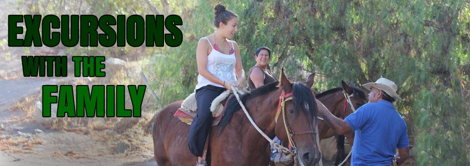 horses2_960x340